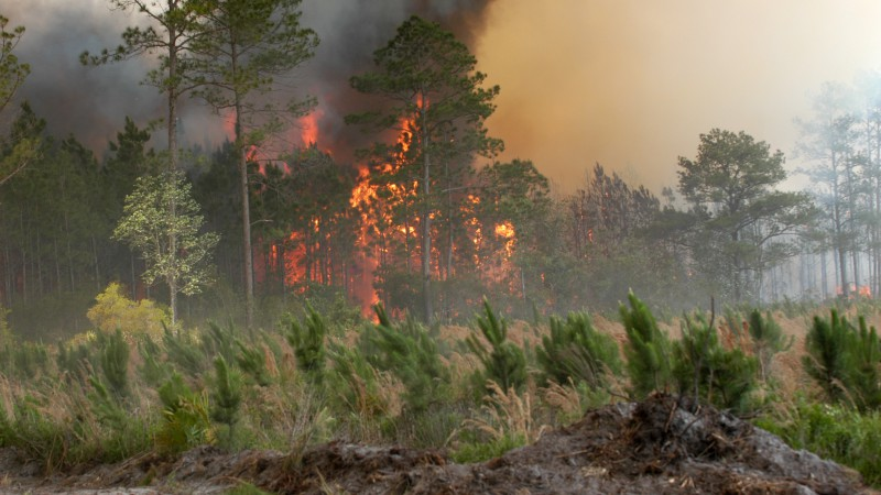 banner image forest fire