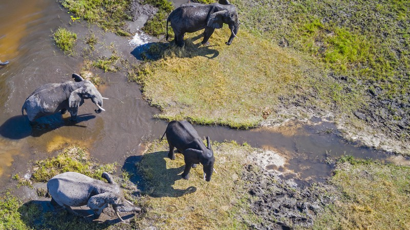 Areal view of a wetland with elephants walking through it