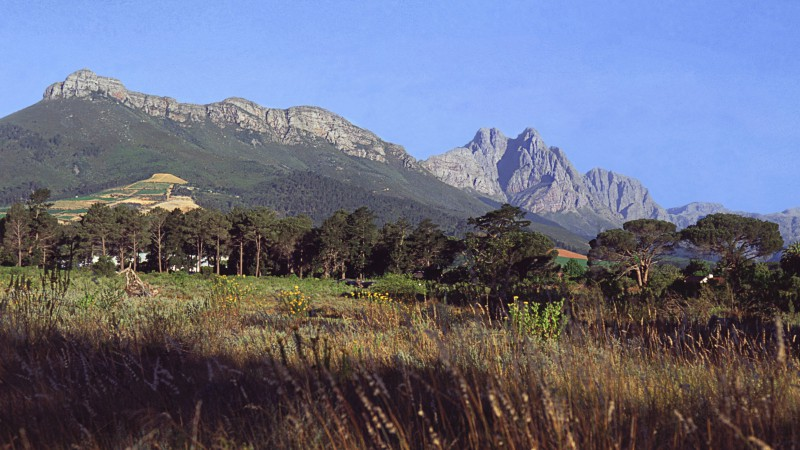 Stellenbosch University announces new School for Climate Studies