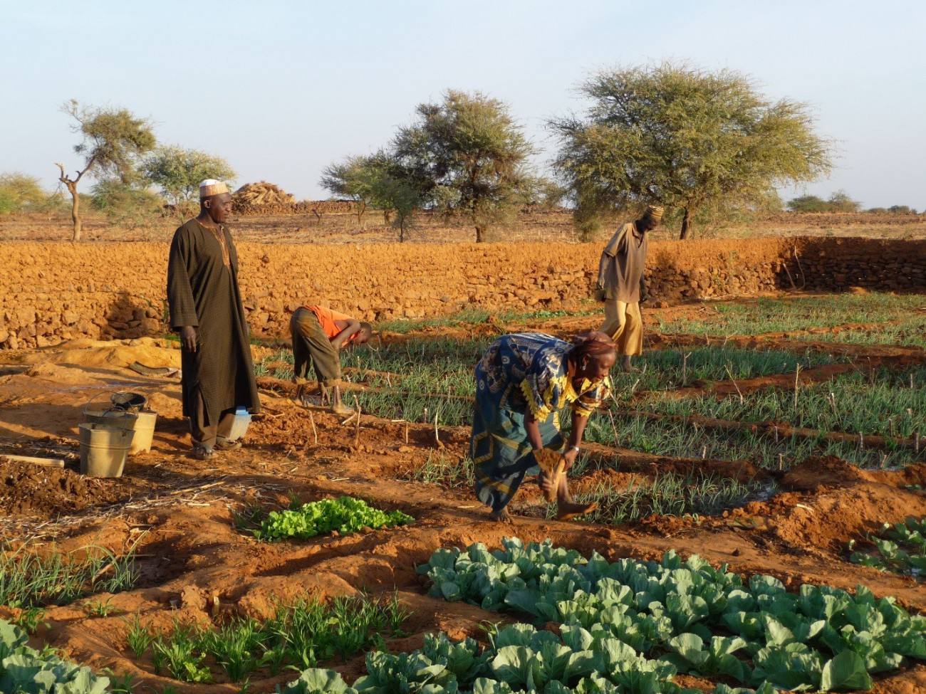 farmers in Niger